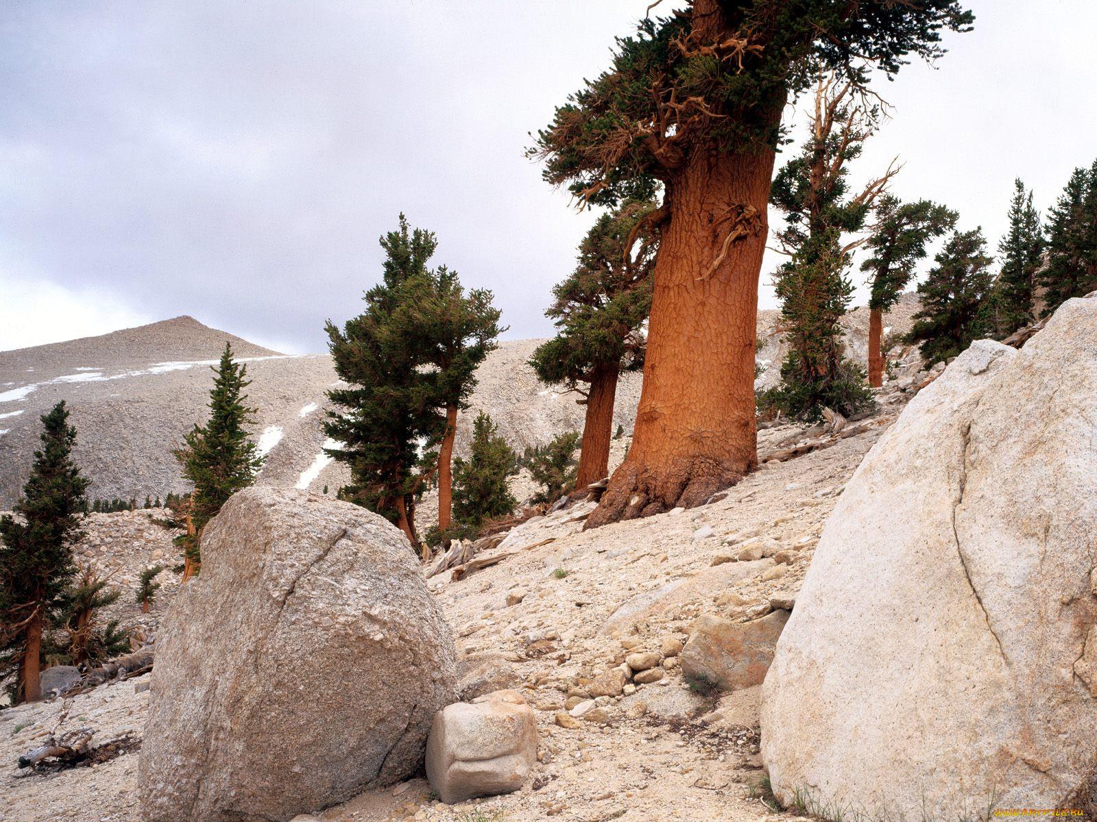 так, дерево растущее в камне фото станках